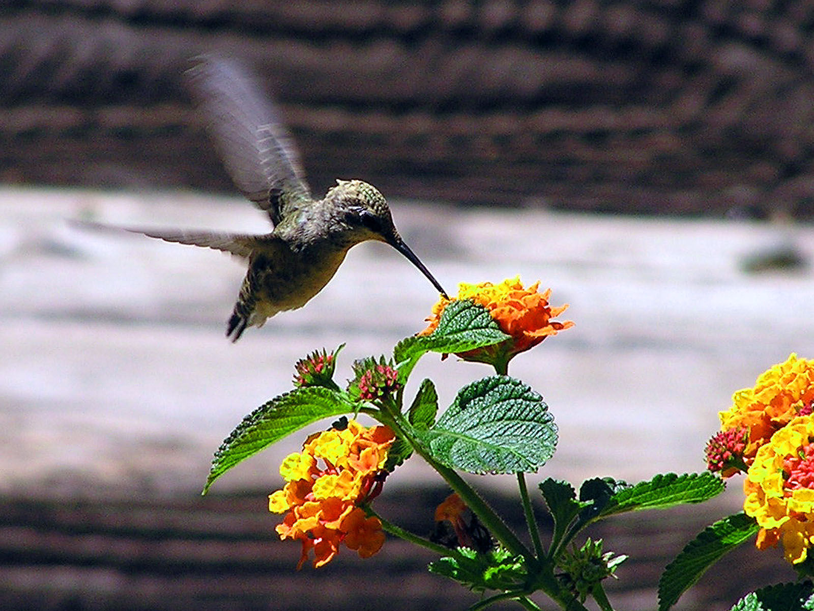 Finding God In Hummingbirds Finding God Daily